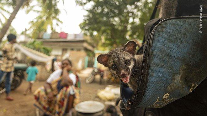 25 tác phẩm chung kết giải nhiếp ảnh quốc tế sẽ cho bạn thấy 7749 sắc thái của thế giới động vật: Tươi đẹp, kỳ lạ và rất khắc nghiệt - Ảnh 5.