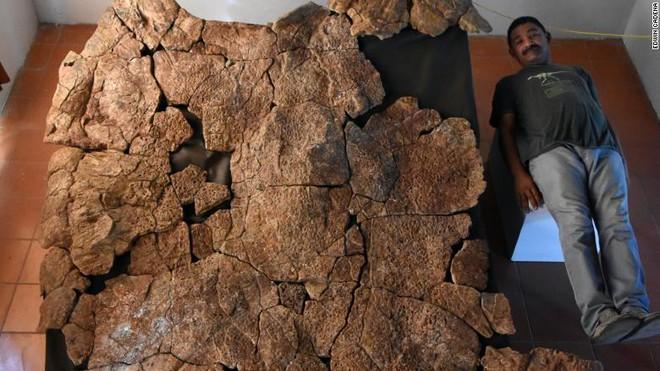 Loài rùa nước ngọt lớn nhất từng tồn tại có chiều dài đến 3 mét, mai nặng tới hơn 1 tấn - Ảnh 3.