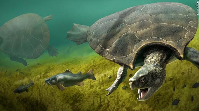 Loài rùa nước ngọt lớn nhất từng tồn tại có chiều dài đến 3 mét, mai nặng tới hơn 1 tấn - Ảnh 1.