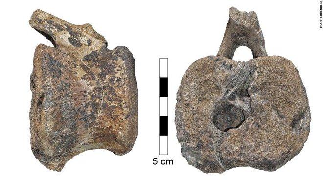 Đốt xương sống của khủng long mỏ vịt