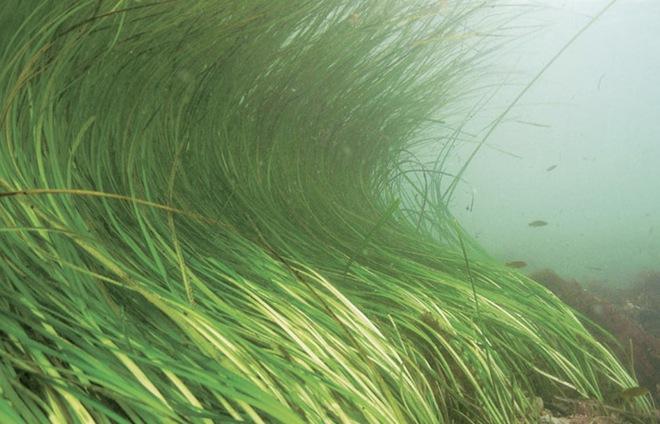 Từ loài gây hại, các nhà khoa học đang có ý định dùng cua xanh để làm nhựa sinh học - Ảnh 4.