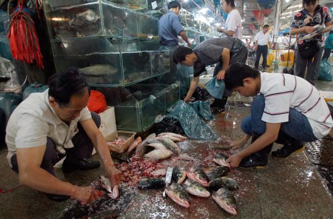 Trung Quốc đang nỗ lực xóa bỏ những khu chợ ẩm ướt để hạn chế tối đa dịch bệnh như thế nào? - Ảnh 5.