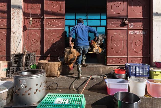 Trung Quốc đang nỗ lực xóa bỏ những khu chợ ẩm ướt để hạn chế tối đa dịch bệnh như thế nào? - Ảnh 8.
