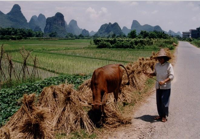 Trung Quốc đang nỗ lực xóa bỏ những khu chợ ẩm ướt để hạn chế tối đa dịch bệnh như thế nào? - Ảnh 11.