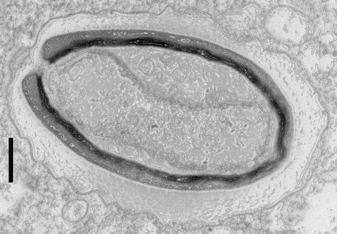 Những loài sinh vật bí ẩn trên Trái Đất khiến giới khoa học đau đầu vì không thể phân loại cho chúng - Ảnh 1.