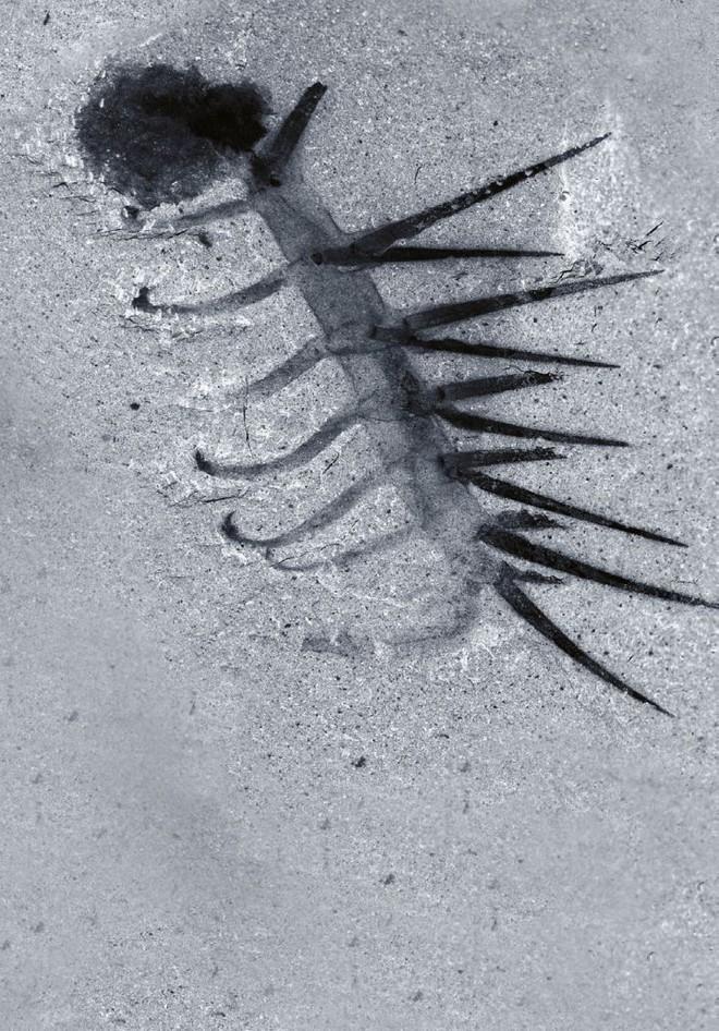Những loài sinh vật bí ẩn trên Trái Đất khiến giới khoa học đau đầu vì không thể phân loại cho chúng - Ảnh 7.