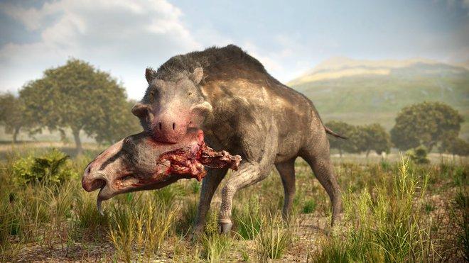 Loài lợn khổng lồ cổ đại: Kẻ khủng bố của Bắc Mỹ thời tiền sử - Ảnh 10.