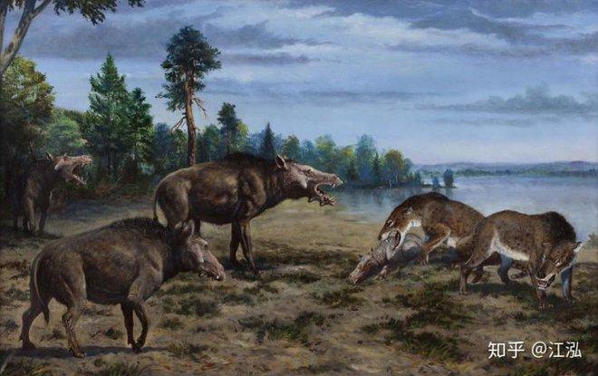 Loài lợn khổng lồ cổ đại: Kẻ khủng bố của Bắc Mỹ thời tiền sử - Ảnh 12.
