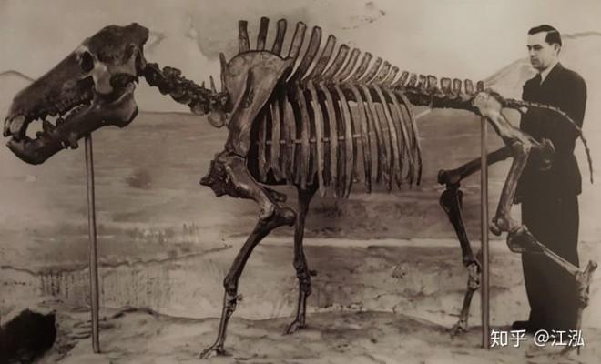 Loài lợn khổng lồ cổ đại: Kẻ khủng bố của Bắc Mỹ thời tiền sử - Ảnh 3.
