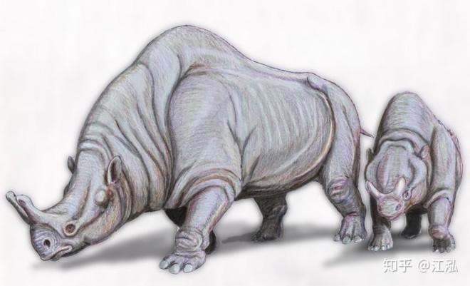 Loài lợn khổng lồ cổ đại: Kẻ khủng bố của Bắc Mỹ thời tiền sử - Ảnh 2.