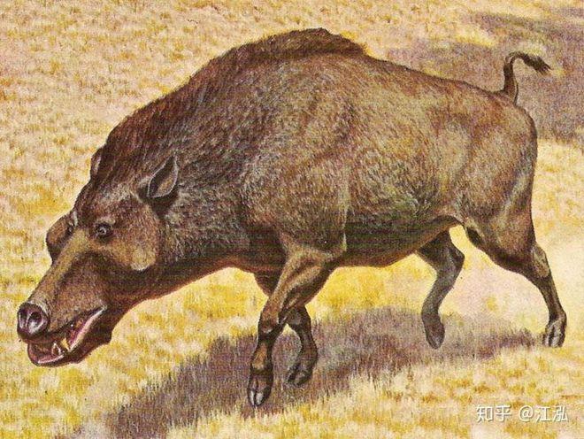 Loài lợn khổng lồ cổ đại: Kẻ khủng bố của Bắc Mỹ thời tiền sử - Ảnh 8.