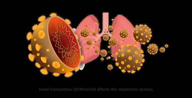 Đi tìm lời giải cho độc tính của virus corona: Khi nào chúng gây chết người, khi nào chỉ gây cúm? - Ảnh 4.