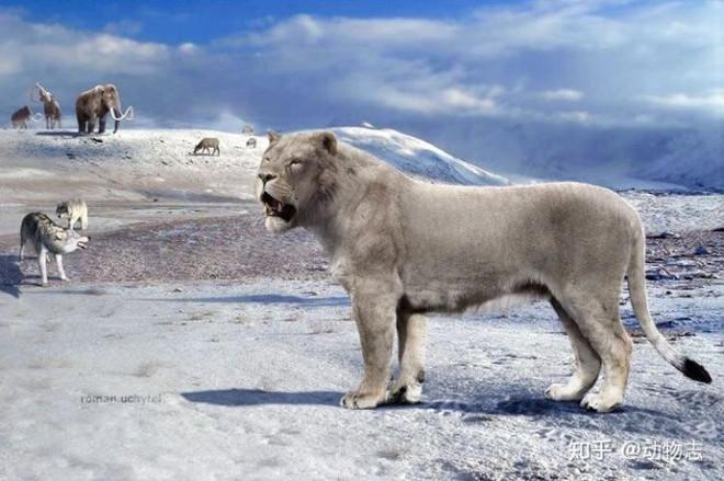 Yangs Tiger: Sư tử bản địa của Trung Quốc, nhưng lại được gọi là hổ - Ảnh 1.