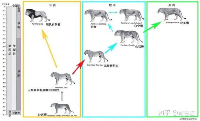 Yangs Tiger: Sư tử bản địa của Trung Quốc, nhưng lại được gọi là hổ - Ảnh 6.