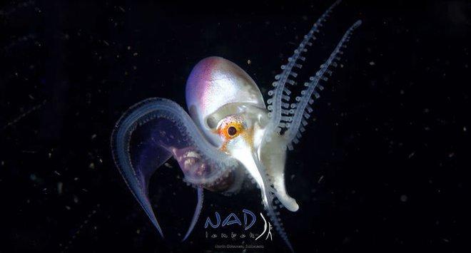 Sân khấu vạn dặm dưới đáy biển: Ai mà ngờ được bạch tuộc là những vũ công điêu luyện đến vậy - Ảnh 1.
