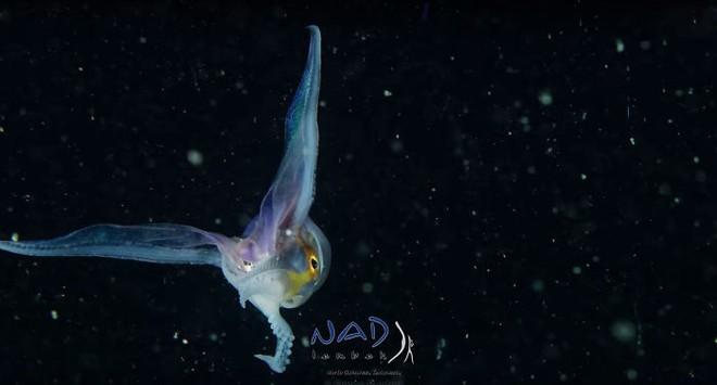 Sân khấu vạn dặm dưới đáy biển: Ai mà ngờ được bạch tuộc là những vũ công điêu luyện đến vậy - Ảnh 2.