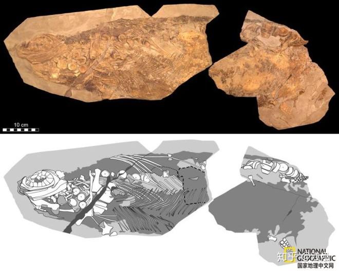 Các nhà cổ sinh vật học phát hiện ra chất béo trên cơ thể của thằn lằn cá từ 180 triệu năm trước - Ảnh 11.