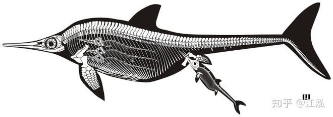 Các nhà cổ sinh vật học phát hiện ra chất béo trên cơ thể của thằn lằn cá từ 180 triệu năm trước - Ảnh 8.