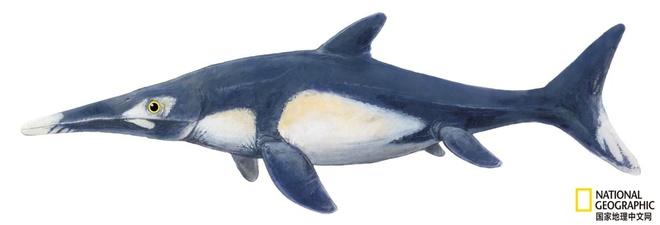 Các nhà cổ sinh vật học phát hiện ra chất béo trên cơ thể của thằn lằn cá từ 180 triệu năm trước - Ảnh 13.