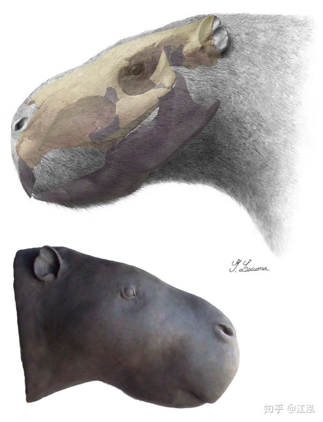 Loài chuột cổ đại lớn nhất từng tồn tại trên Trái Đất có thể đạt kích thước tương đương với một con bò tót - Ảnh 12.