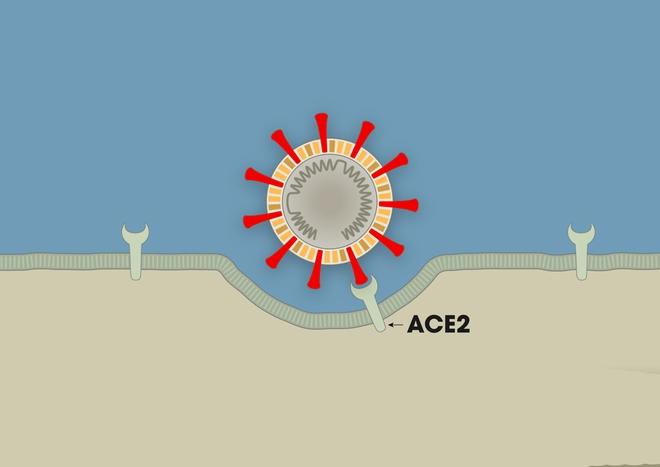 Chuyên gia: COVID-19 là 3 cú đấm liên hoàn vào cơ thể, nếu chặn được đòn đánh cuối cùng, bệnh nhân sẽ thoát khỏi cửa tử - Ảnh 2.