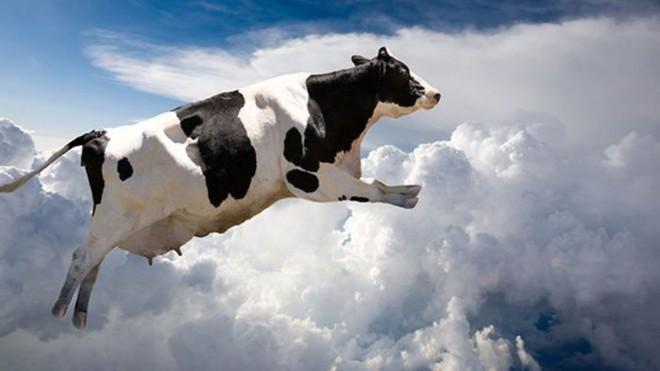 Mẩu tin giả hết sức kỳ khôi được ghi cả trên báo New York Times: Bò rơi từ trên trời xuống, làm đắm tàu đang đi biển - Ảnh 1.