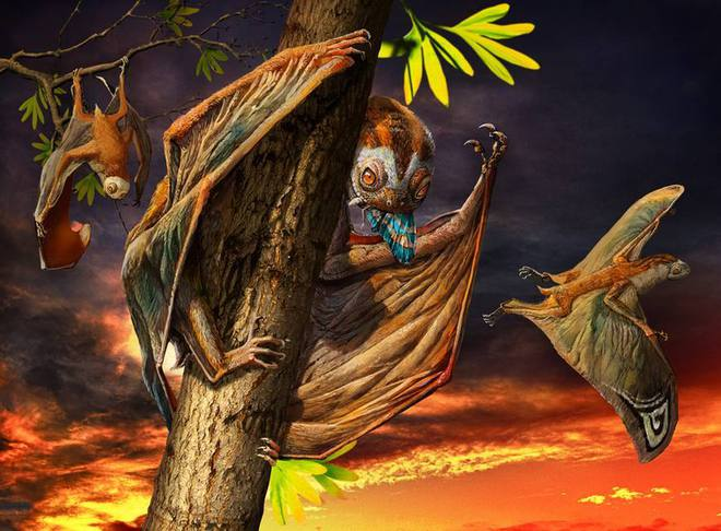 Luôn treo mình lộn ngược trên cây như loài dơi, đây nhất định là loài thằn lằn bay cổ đại kỳ lạ nhất từng tồn tại ở Trung Quốc - Ảnh 1.
