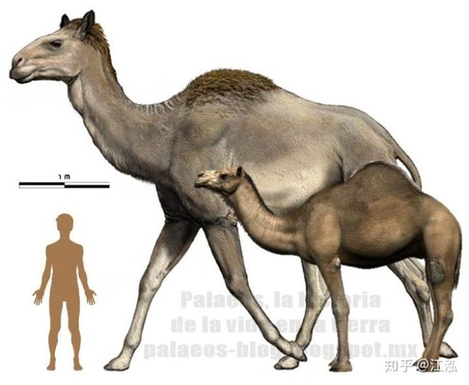 Sự tuyệt chủng của những loài động vật có vú lớn tại Bắc Mỹ đã mang tới hậu quả gì? - Ảnh 6.