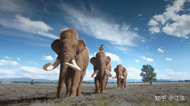 Sự tuyệt chủng của những loài động vật có vú lớn tại Bắc Mỹ đã mang tới hậu quả gì? - Ảnh 13.