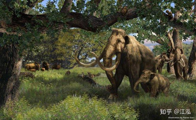 Sự tuyệt chủng của những loài động vật có vú lớn tại Bắc Mỹ đã mang tới hậu quả gì? - Ảnh 3.