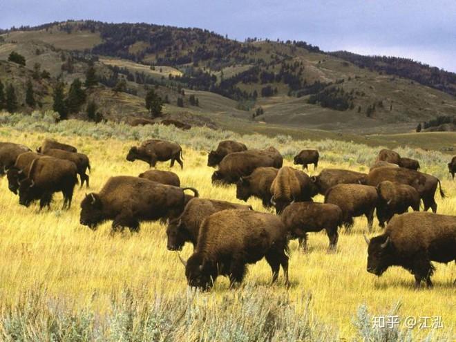 Sự tuyệt chủng của những loài động vật có vú lớn tại Bắc Mỹ đã mang tới hậu quả gì? - Ảnh 1.
