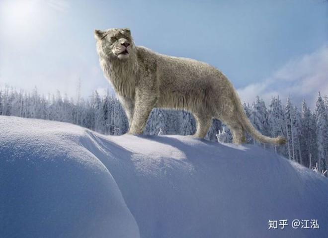Sự tuyệt chủng của những loài động vật có vú lớn tại Bắc Mỹ đã mang tới hậu quả gì? - Ảnh 4.