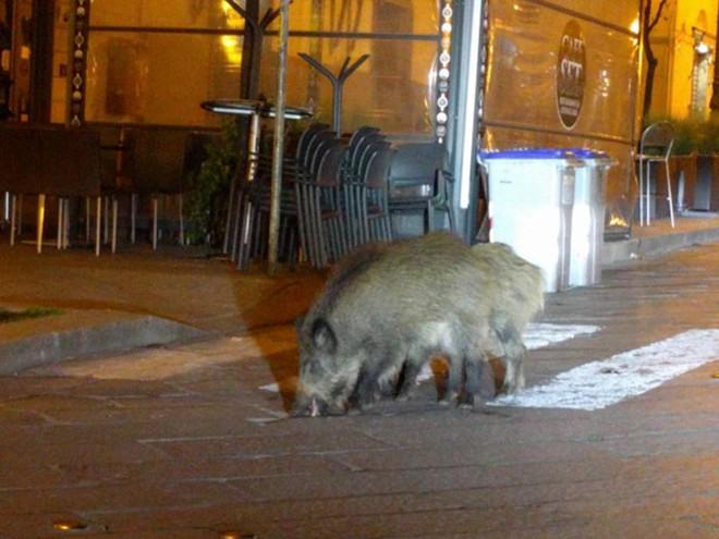 Con người cách ly trong nhà trốn dịch, động vật hoang dã bỗng chiếm dụng đường phố - Ảnh 10.