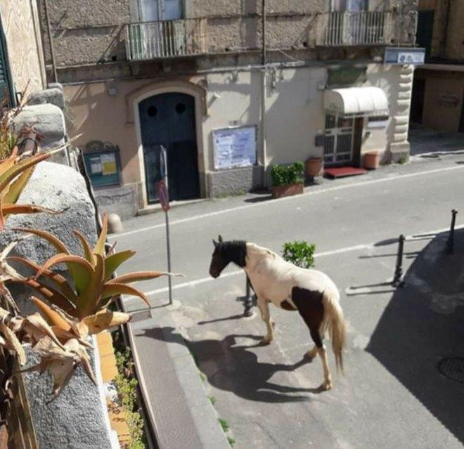 Con người cách ly trong nhà trốn dịch, động vật hoang dã bỗng chiếm dụng đường phố - Ảnh 11.