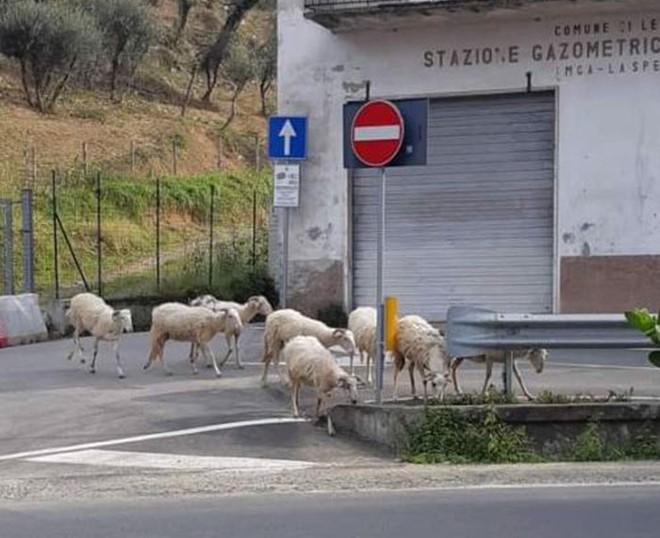 Con người cách ly trong nhà trốn dịch, động vật hoang dã bỗng chiếm dụng đường phố - Ảnh 12.