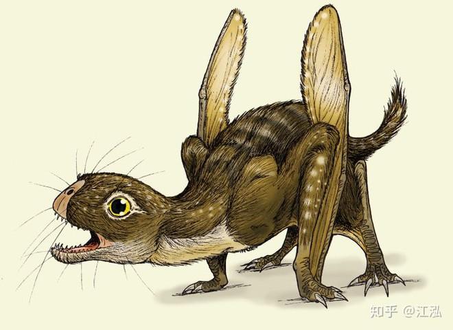 Luôn treo mình lộn ngược trên cây như loài dơi, đây nhất định là loài thằn lằn bay cổ đại kỳ lạ nhất từng tồn tại ở Trung Quốc - Ảnh 11.