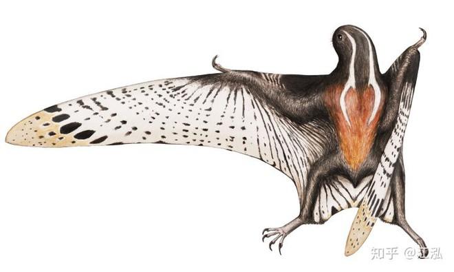 Luôn treo mình lộn ngược trên cây như loài dơi, đây nhất định là loài thằn lằn bay cổ đại kỳ lạ nhất từng tồn tại ở Trung Quốc - Ảnh 8.