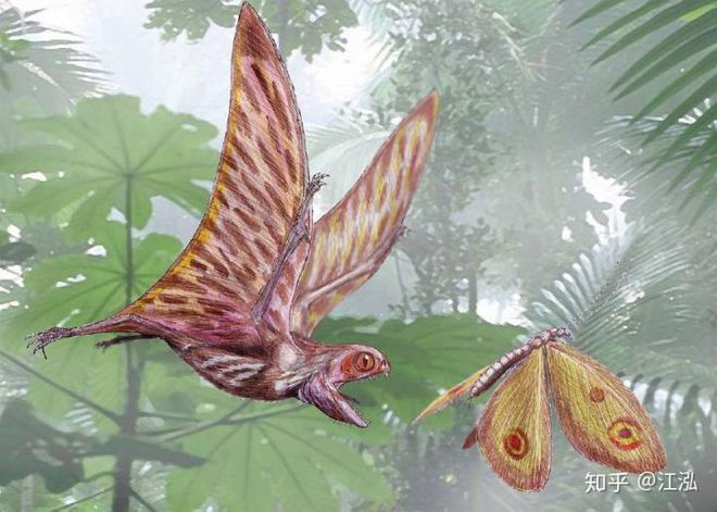 Luôn treo mình lộn ngược trên cây như loài dơi, đây nhất định là loài thằn lằn bay cổ đại kỳ lạ nhất từng tồn tại ở Trung Quốc - Ảnh 12.