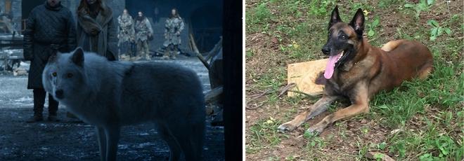 Nổi da gà với trailer mới của The Walking Dead: Sao lại giống trận đánh Night King trong Game of Thrones đến thế! - Ảnh 8.