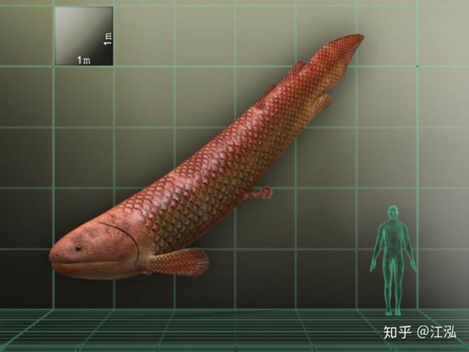 Rhizodus hibberti : Quái vật kinh hoàng của kỷ Carbon - Ảnh 3.