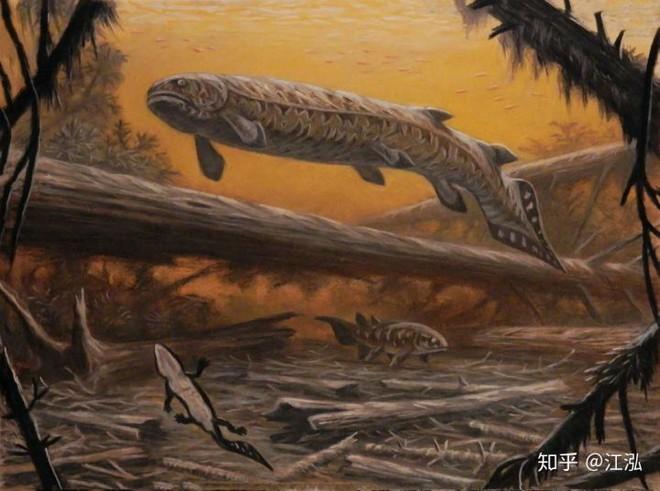 Rhizodus hibberti : Quái vật kinh hoàng của kỷ Carbon - Ảnh 8.
