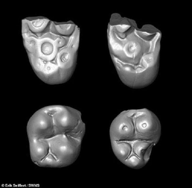 Phát hiện chấn động: Đàn khỉ dùng bè vượt gần 1500km qua Đại Tây Dương để tới Nam Mỹ 34 triệu năm trước - Ảnh 3.