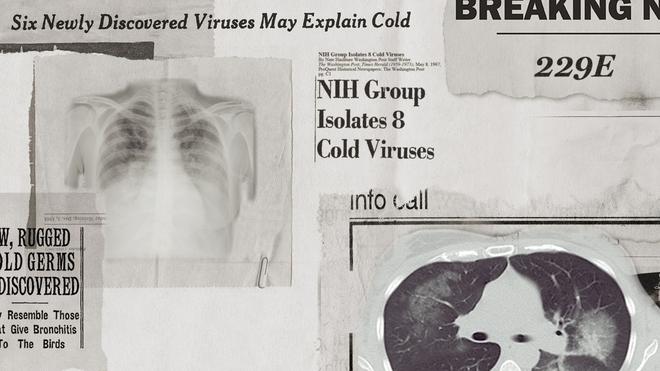 Lịch sử bí ẩn của họ virus corona: Từ cơn cảm lạnh thông thường đến những đại dịch toàn cầu - Ảnh 1.