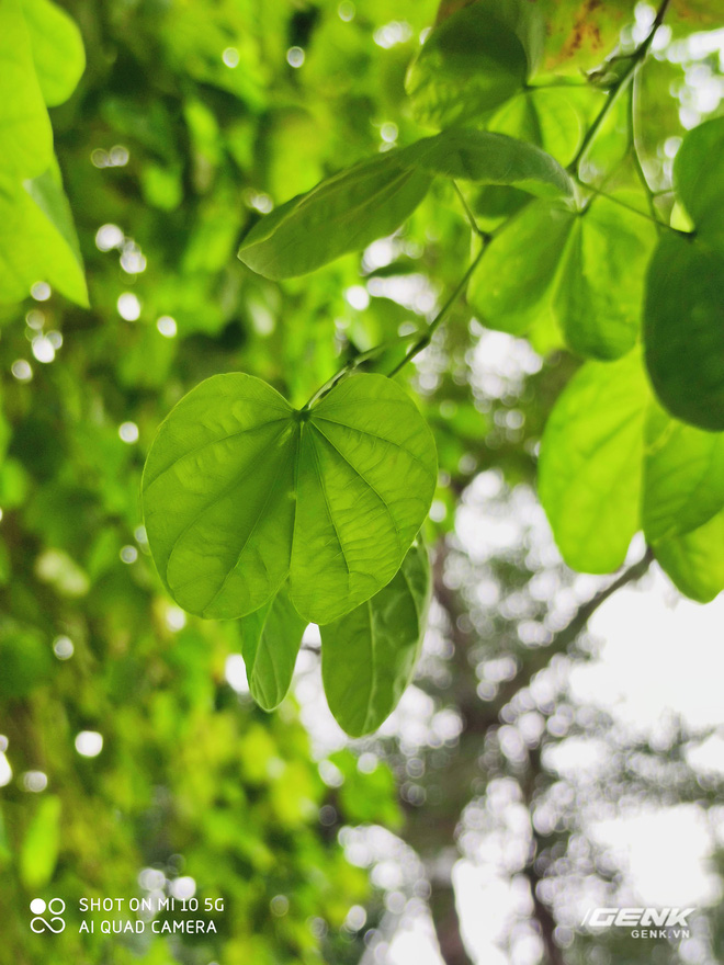 mi10 main camera leaf 1585827210152676837579