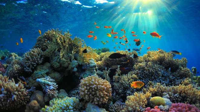 Nghiên cứu: biển đổi khí hậu làm thay đổi độ pH của biển, quay trở về mức như 14 triệu năm trước - Ảnh 1.