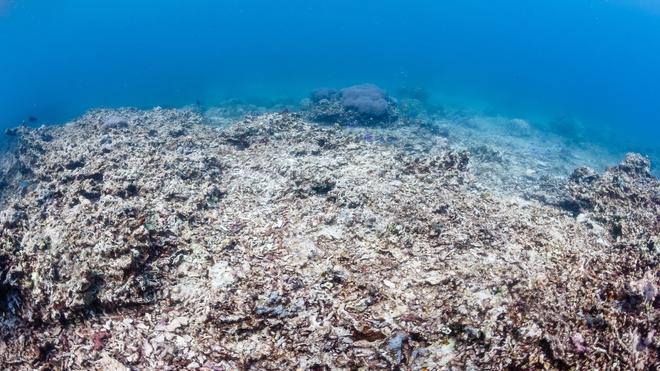 Nghiên cứu: biển đổi khí hậu làm thay đổi độ pH của biển, quay trở về mức như 14 triệu năm trước - Ảnh 2.