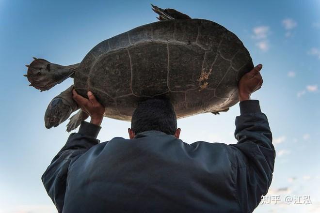 Phát hiện loài rùa cổ đại lớn nhất từng tồn tại trên Trái Đất - Ảnh 3.