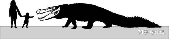 Phát hiện loài rùa cổ đại lớn nhất từng tồn tại trên Trái Đất - Ảnh 9.