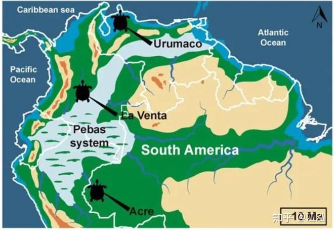 Phát hiện loài rùa cổ đại lớn nhất từng tồn tại trên Trái Đất - Ảnh 12.