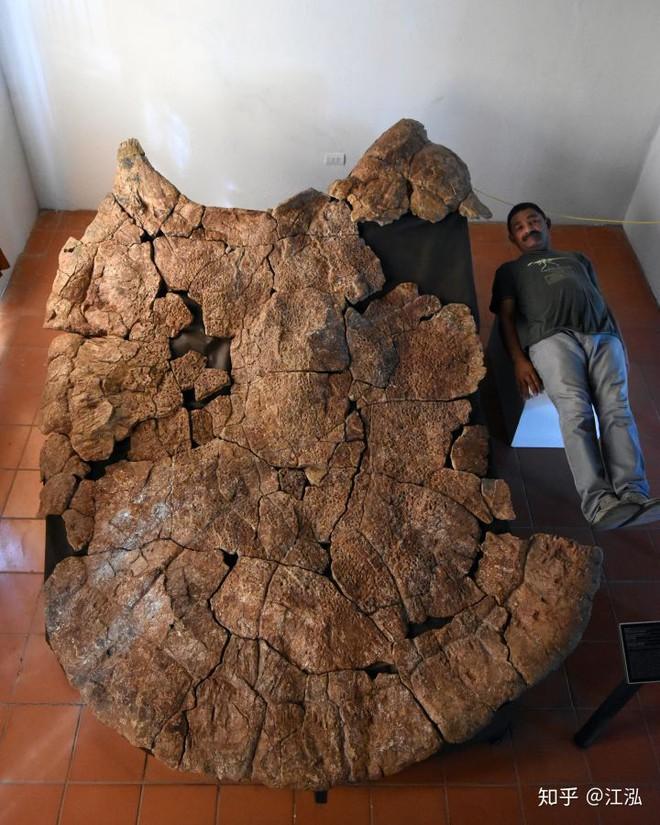 Phát hiện loài rùa cổ đại lớn nhất từng tồn tại trên Trái Đất - Ảnh 4.
